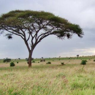 A Stunning Kenyan Safari, Part II: Tsavo West