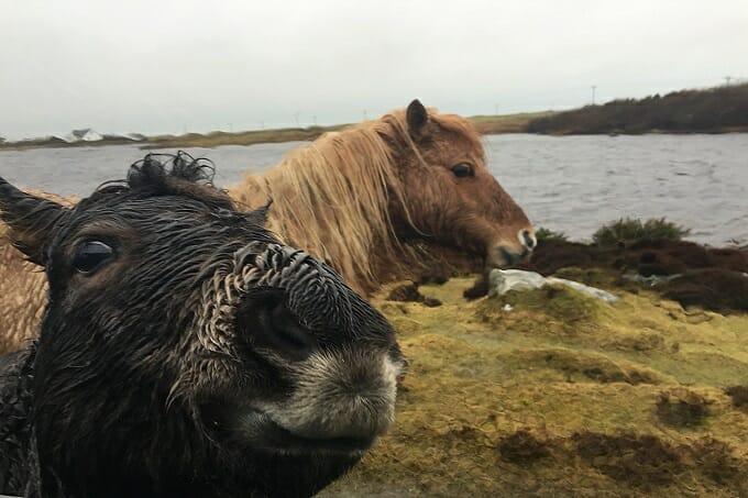 Loch Skipport ponies, South Uist