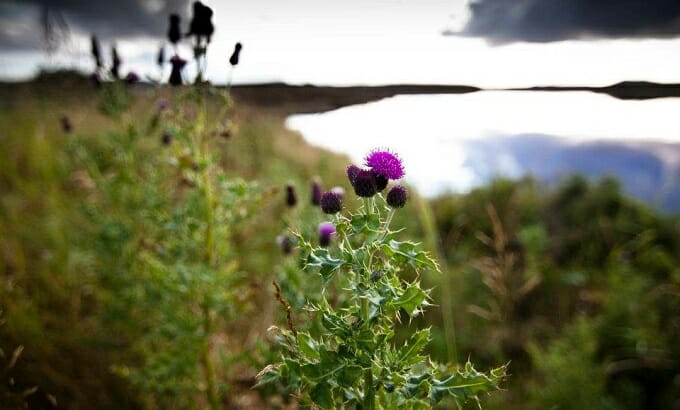 Flower of Scotland by a Lewis loch