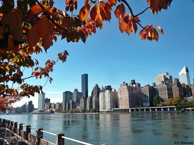 Autumn leaves, Roosevelt Island