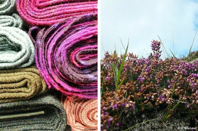 Harris Tweed and purple heather in bloom