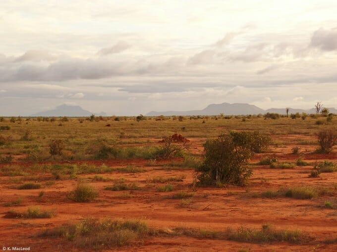 Red earth of Tsavo East, seen during a Kenyan safari