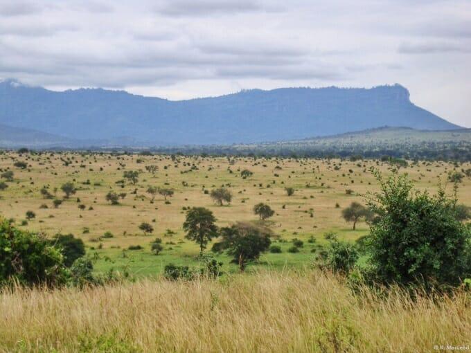 Safari in Taita Hills, Kenya
