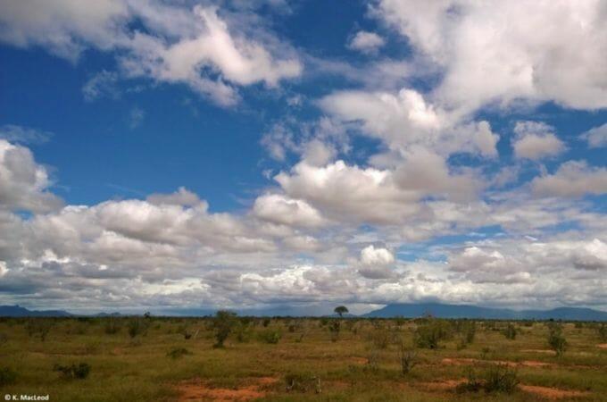 View of the savannah on a Kenyan safari