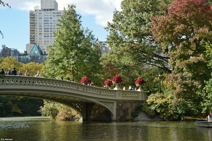 Autumn leaves at Central Park