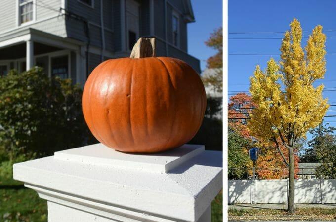 Fall colors on City Island