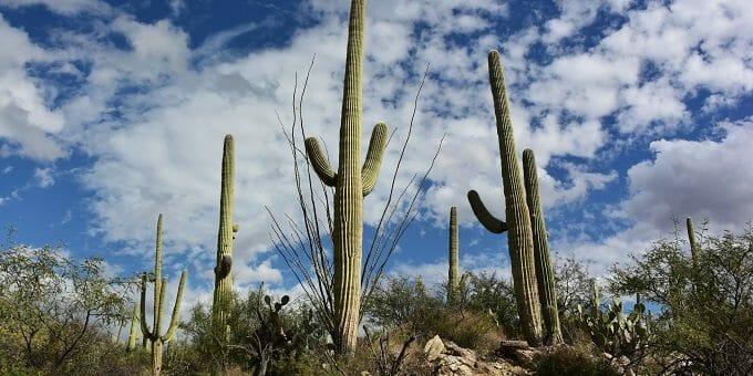 Hiking in the Arizona Desert – in Skinny Jeans!