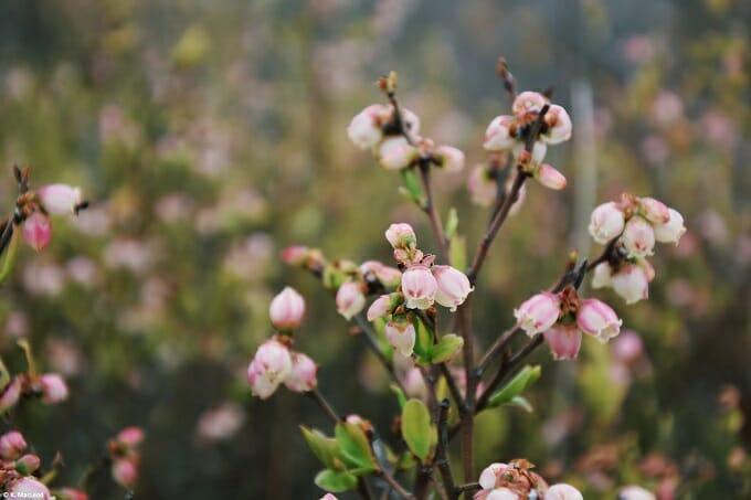 Beacon wildflowers