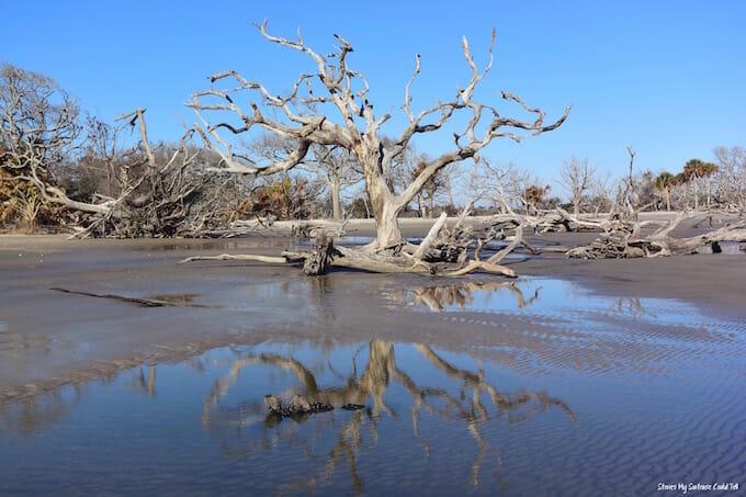Driftwood Beach Tree