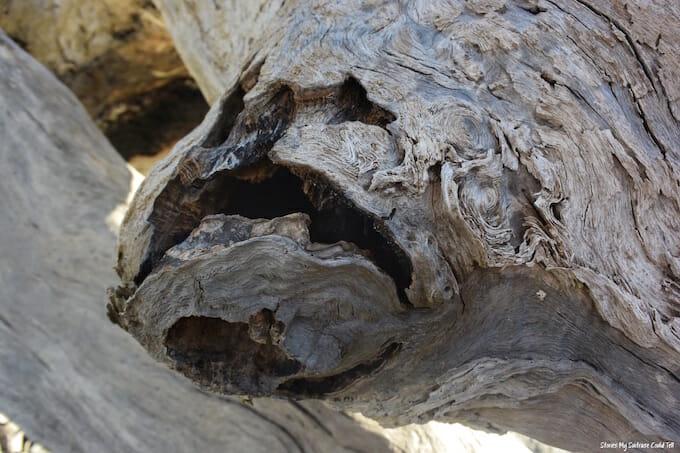 Driftwood Beach branch