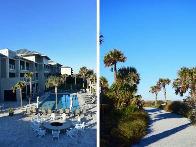 Palm trees Jekyll Ocean Club