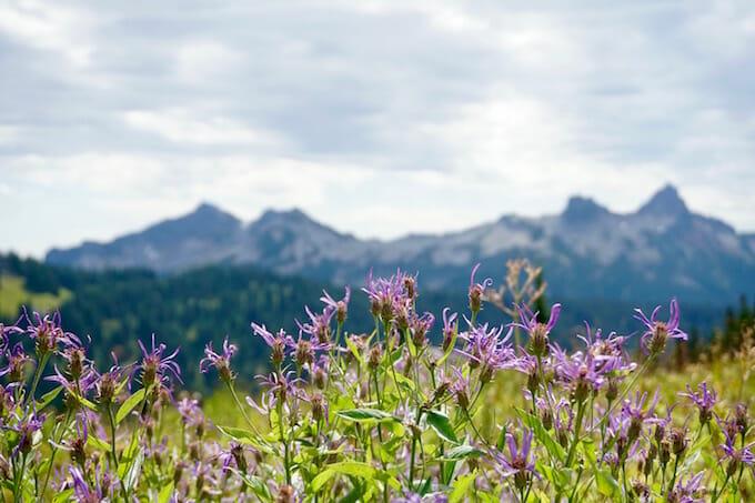 Mount Rainier wildflowers
